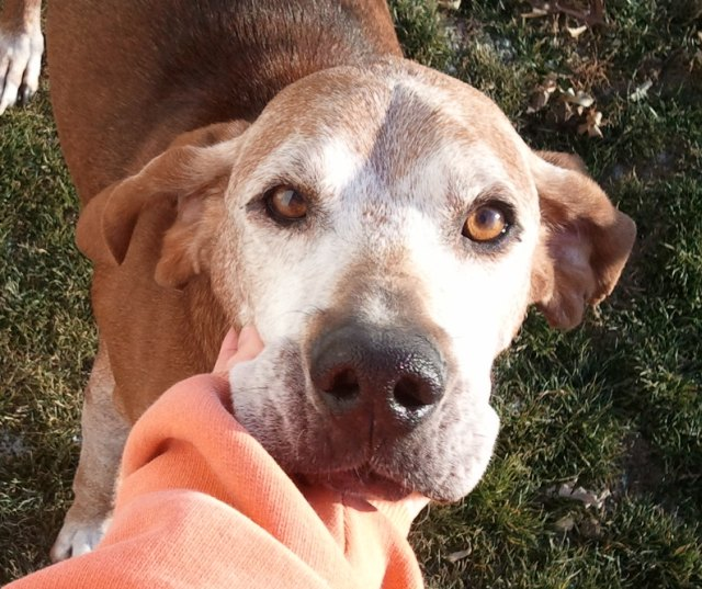 Pets for Adoption at Agape Fosters, in Reinbeck, IA | Petfinder