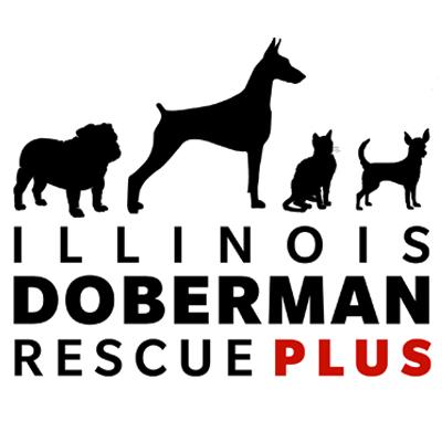 Pets For Adoption At Illinois Doberman Rescue Plus In Barrington