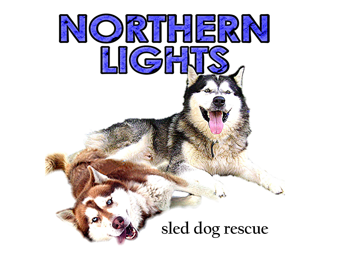 Northern Lights Sled Dog Rescue: Siberian Husky - Alaskan Malamute