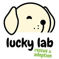 Lucky Lab Rescue and Adoption