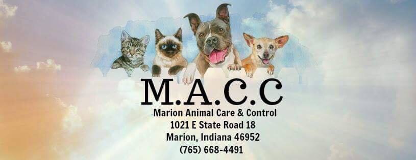Pets For Adoption At Marion Animal Care And Control In Marion In