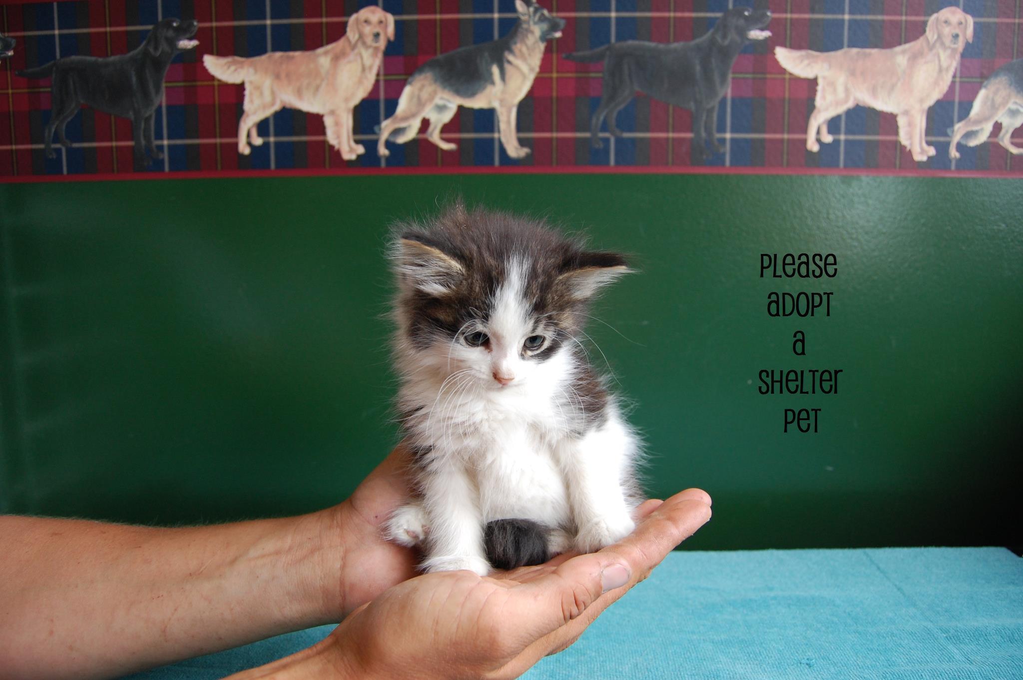 Kitten - Adopted !