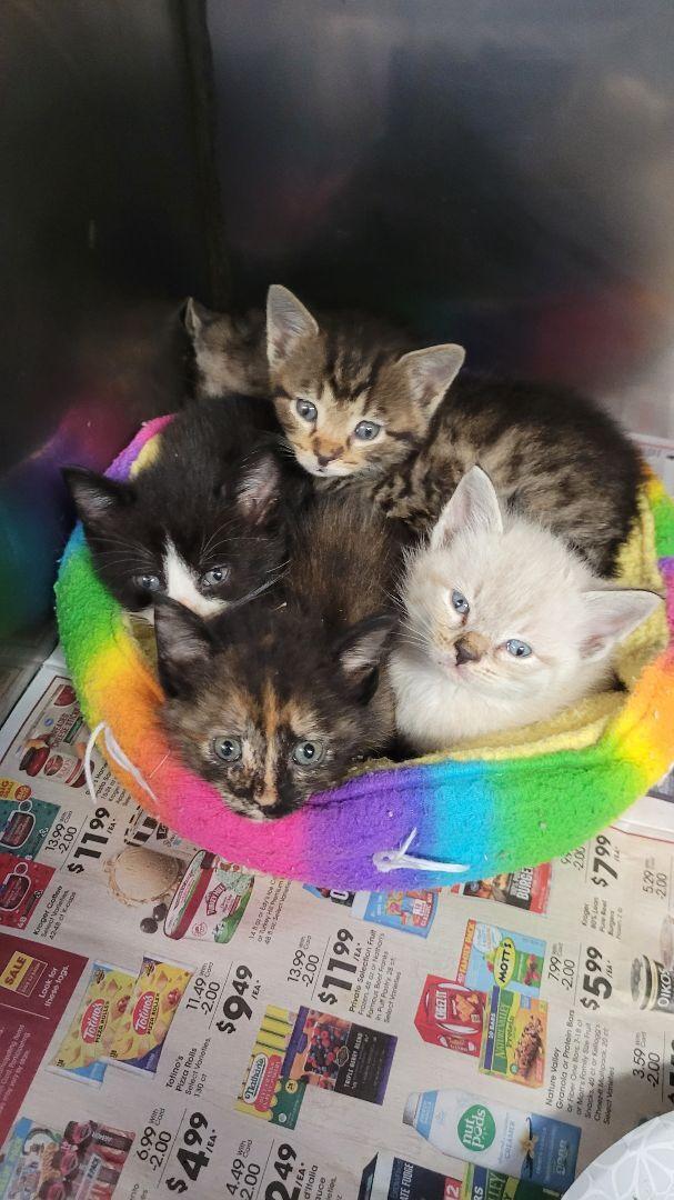 Butterscotch kitty