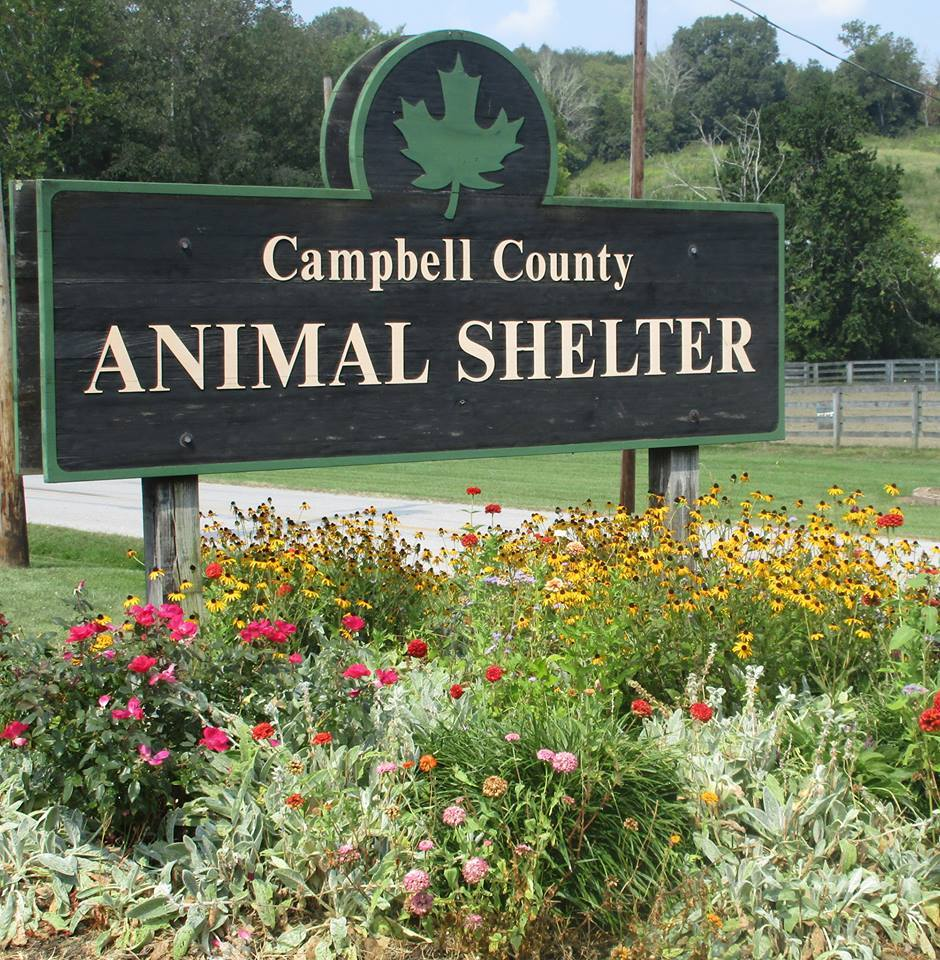 Campbell County Animal Shelter