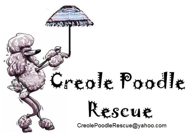 Pets for Adoption at Creole Poodle Club Rescue, in Gonzales