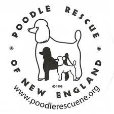 Poodle Rescue New England