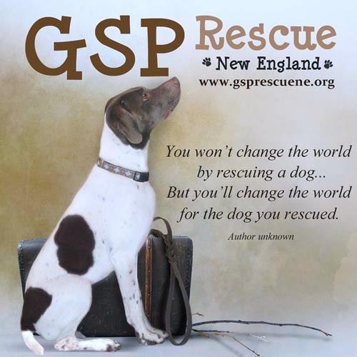 GSP Rescue New England