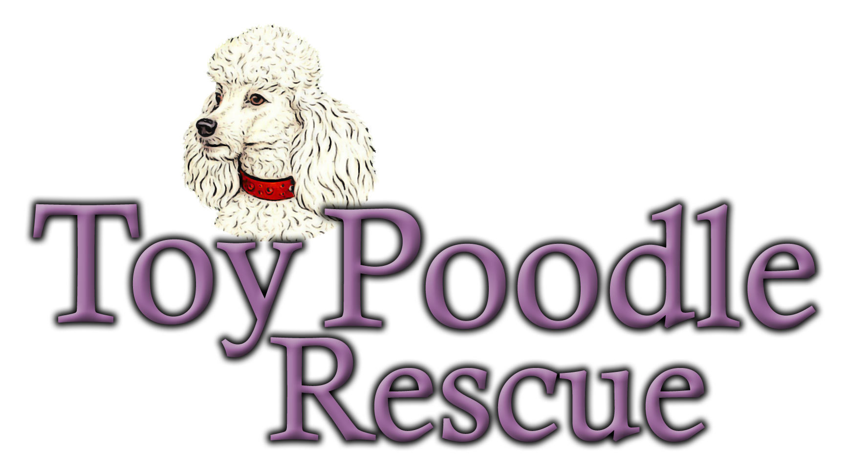 Pets For Adoption At Toy Poodle Rescue In Dover Ma Petfinder