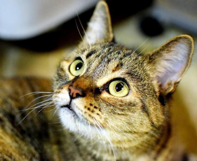 Second Chance Shelter for Cats