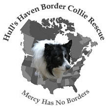 Pets For Adoption At Hull S Haven Border Collie Rescue In Winnipeg