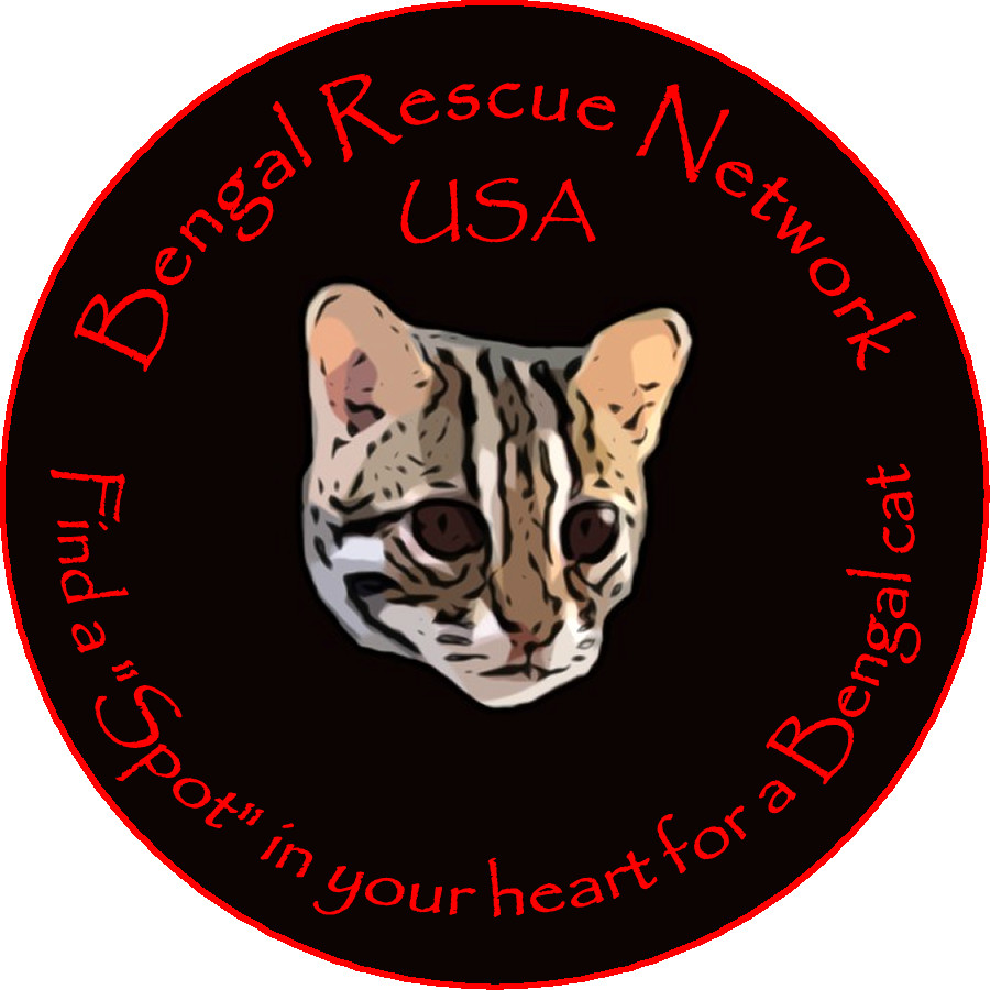 Pets for Adoption at Bengal Rescue Network (501c3), in