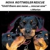 Pets For Adoption At Nova Rottweiler Rescue League Inc In