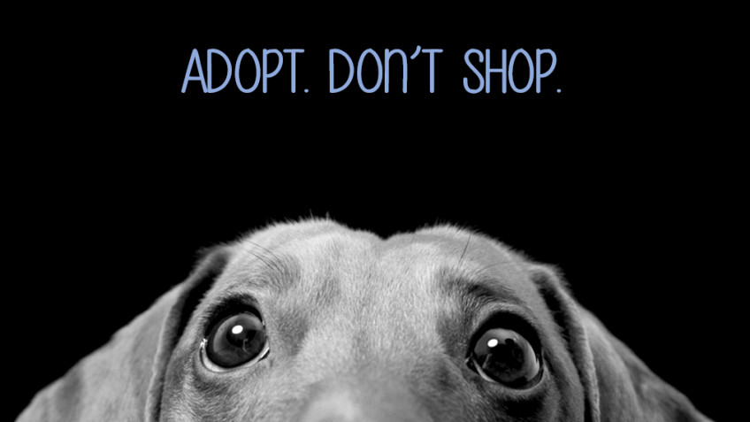 Save Animals From Euthanasia (S.A.F.E.)