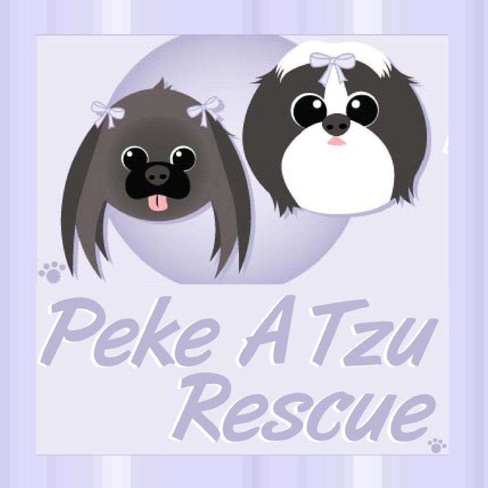 Peke A Tzu Rescue