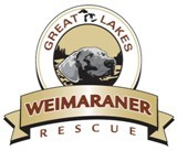 Great Lakes Weimaraner Rescue, Inc.