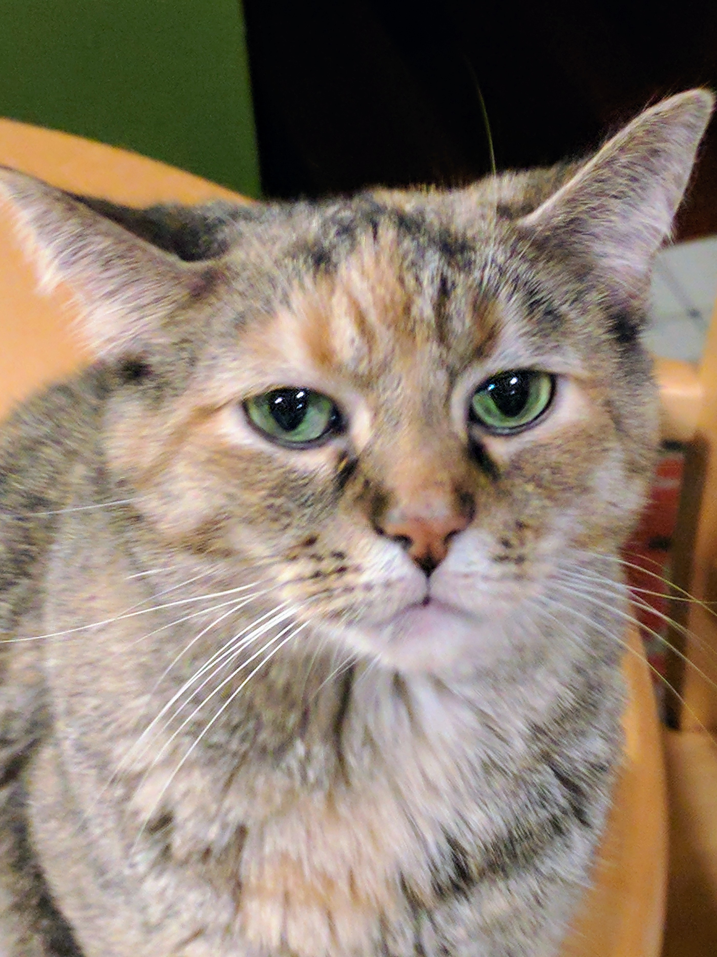 Sophie had a sad story and was recently adopted.