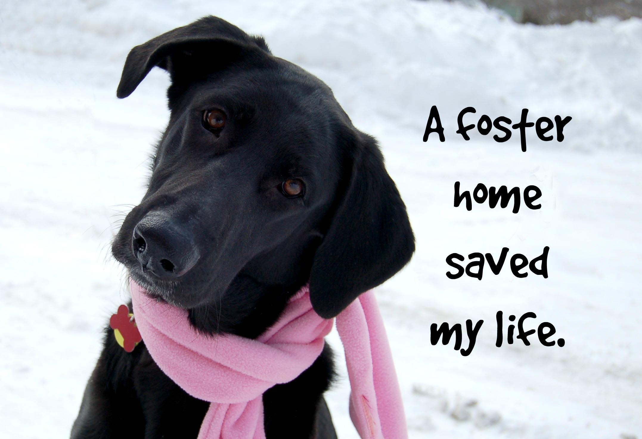 Waggin Tails Dog Rescue Northville Mi