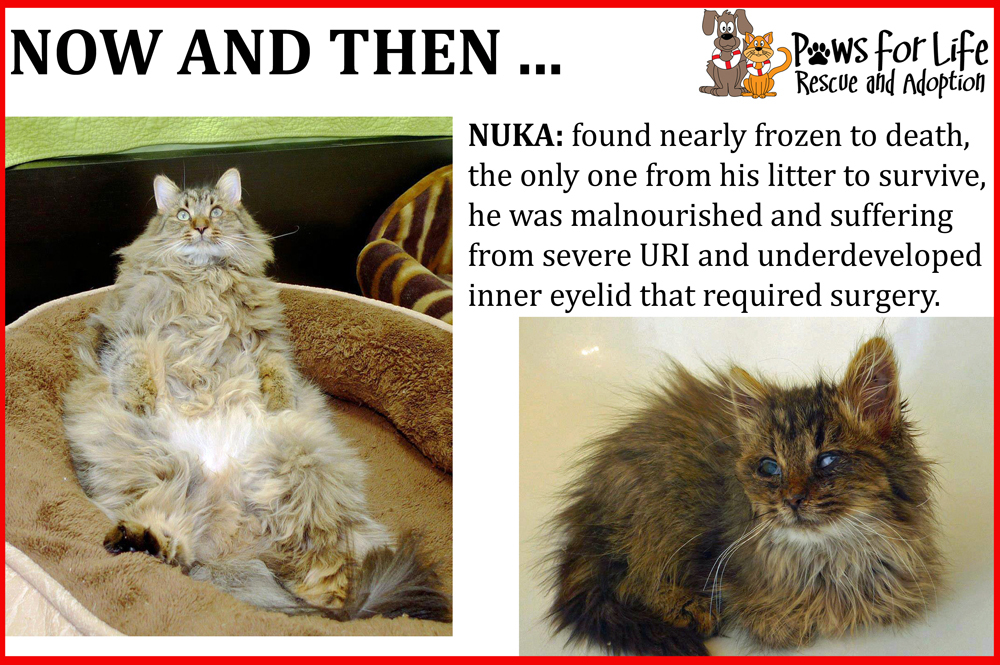 Before and After of Nuka