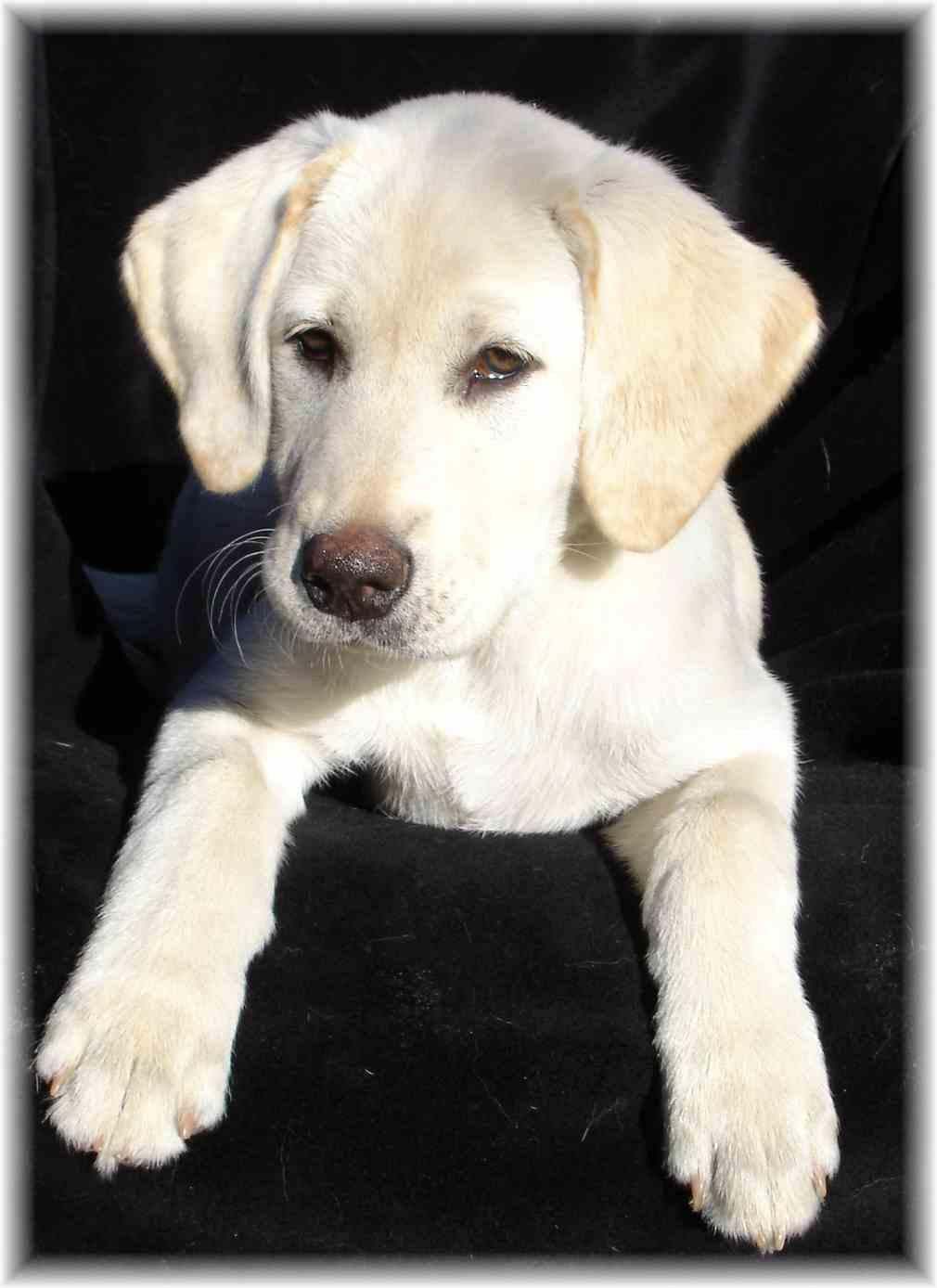 C.A.R.E.S. (Companion Animal Rehabilitation, Education & Sanctuary)