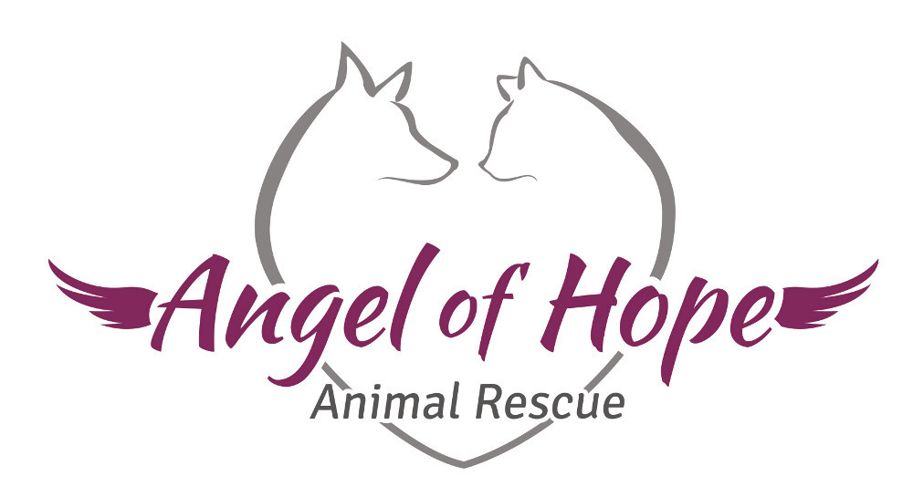 Furry Angels Cat Rescue