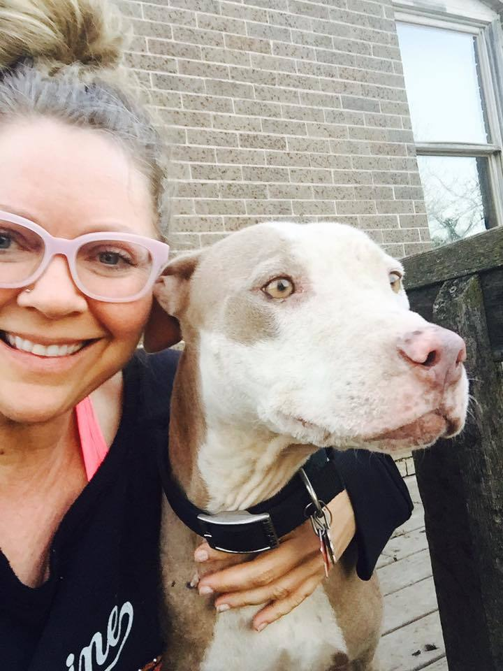 Gemini Rottweiler and Pitbull Rescue, Inc.