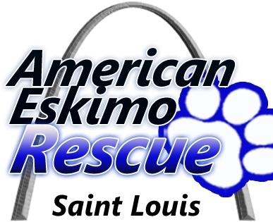 American Eskimo Rescue St. Louis