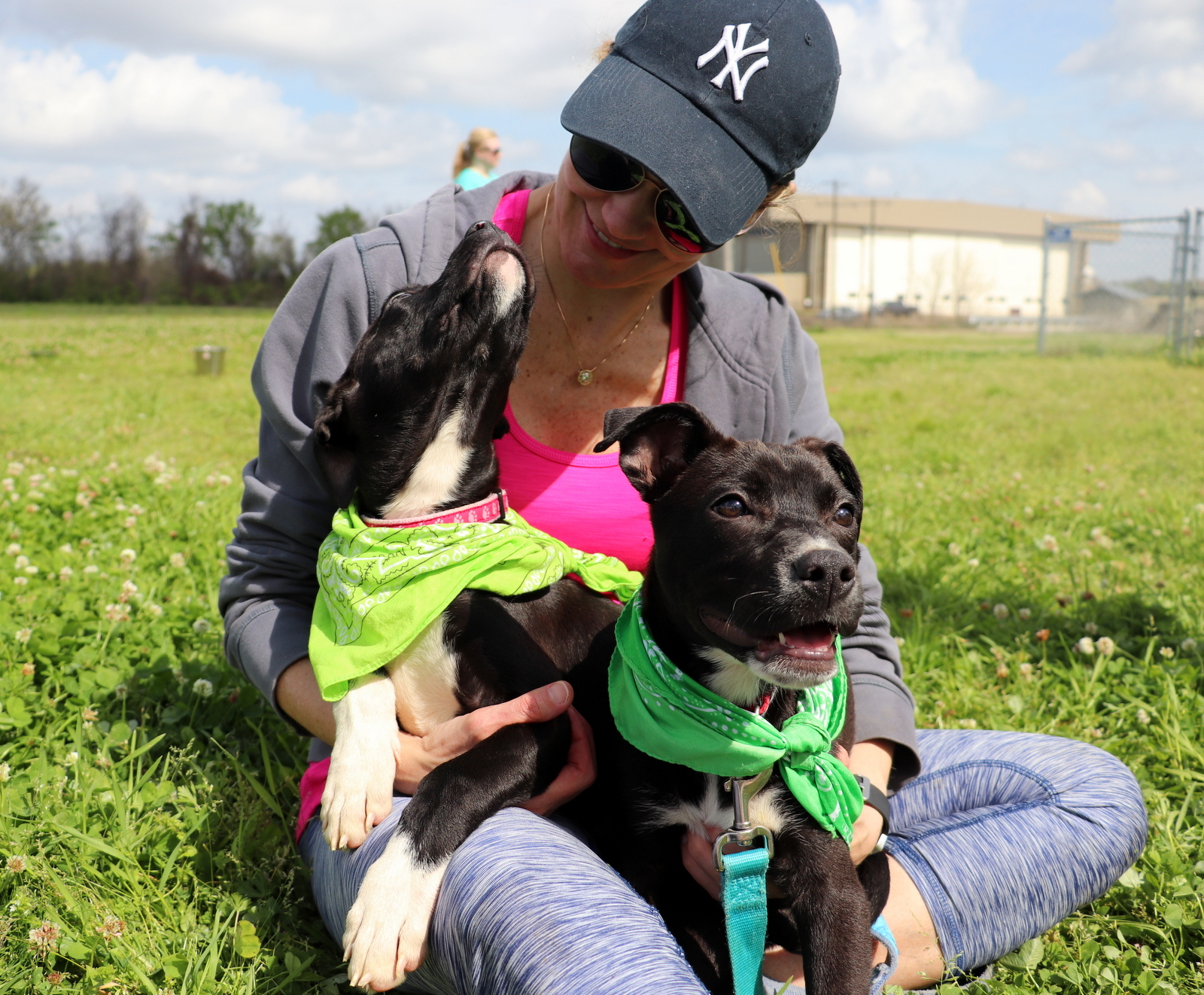 Pets for Adoption at Jackson Friends of Animal Shelter, in