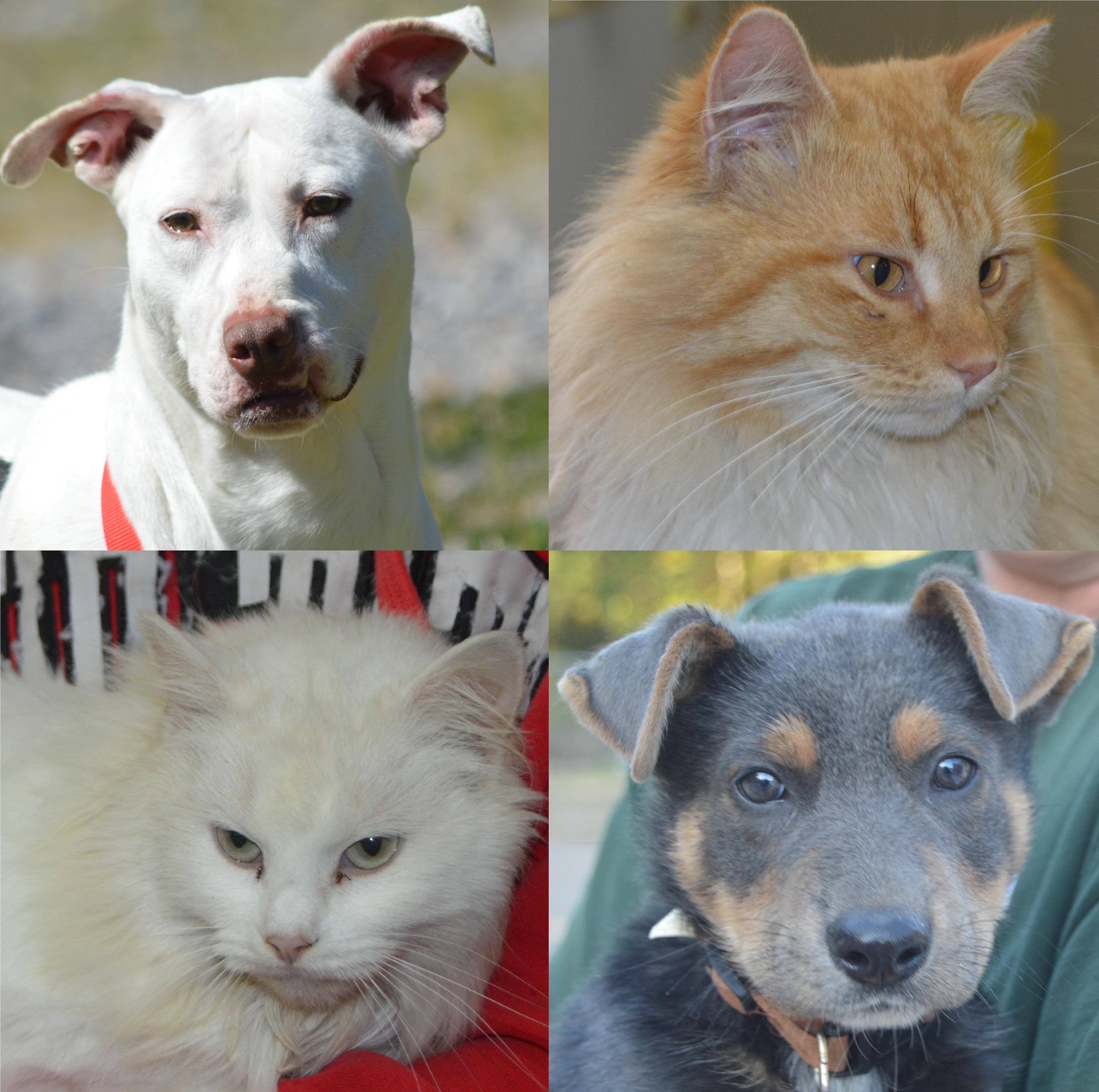 Friends of Horn Lake Animal Shelter
