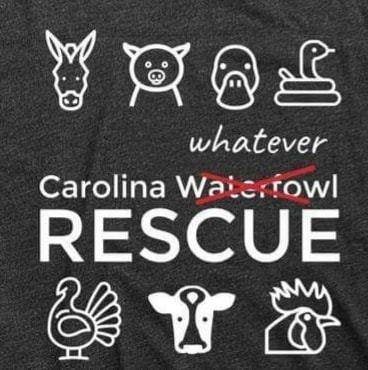 Carolina Waterfowl Rescue