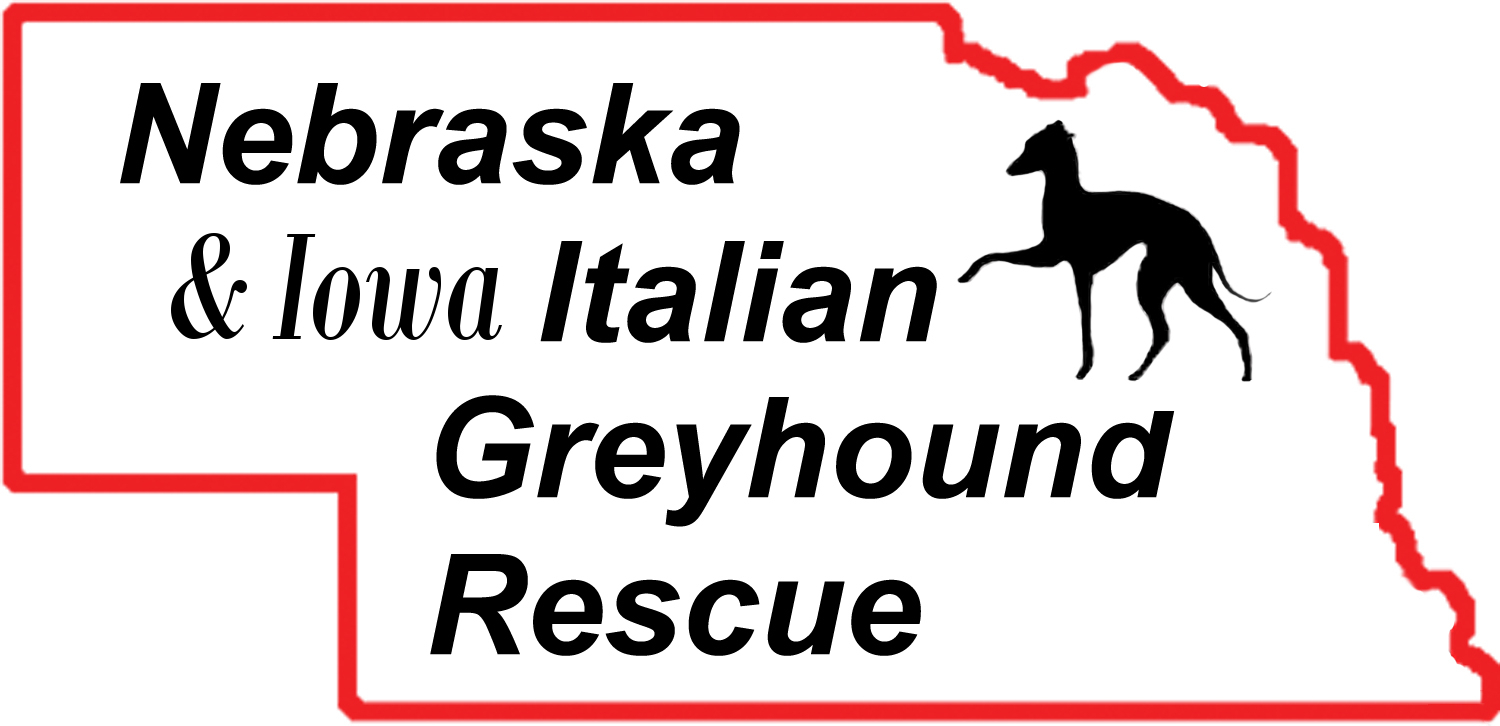 Nebraska Italian Greyhound Rescue (IGCA)