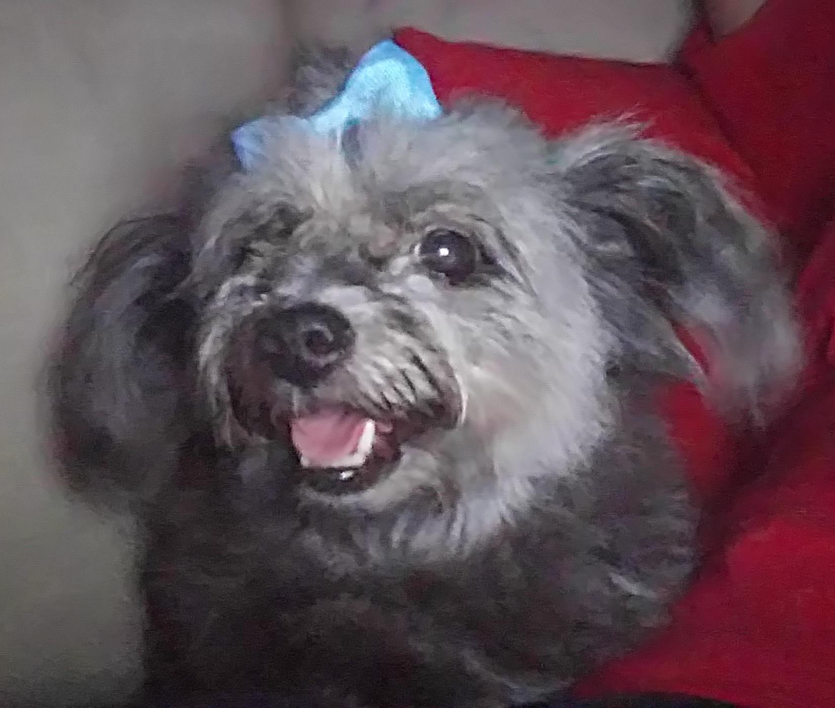 New Hampshire Small Dog Rescue