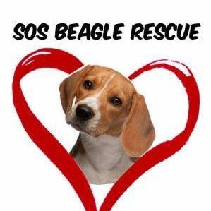 Pets For Adoption At Sos Beagle Rescue Nj In Atco Nj Petfinder