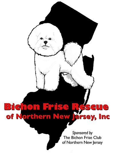pets for adoption at bichon frise rescue of nnj inc in newton nj