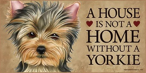 Pets For Adoption At Yorkiehaven In Blenheim Nj Petfinder