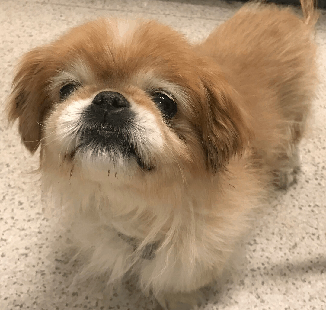 Pekingese Rescue Network Inc.