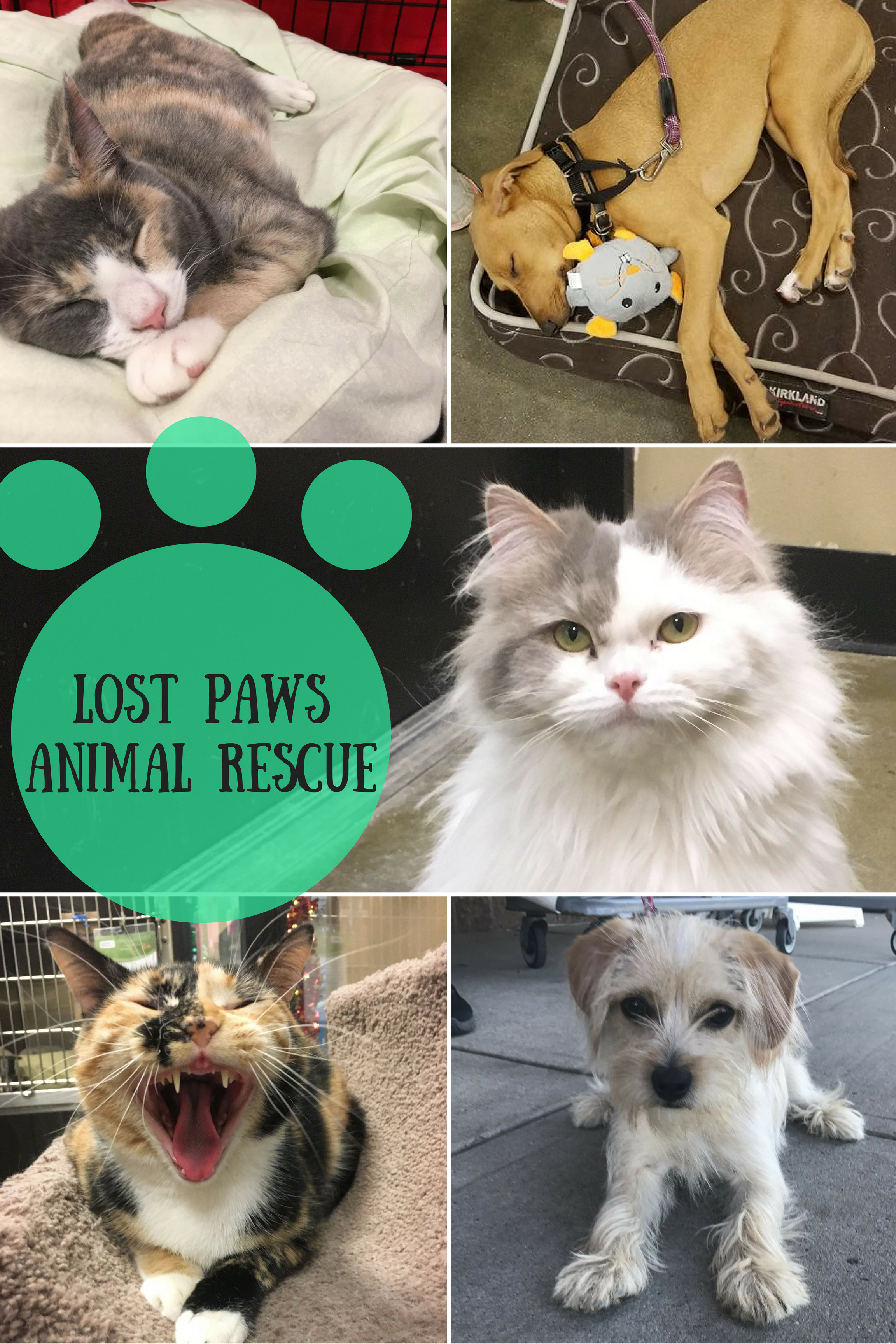 Lost Paws Animal Rescue