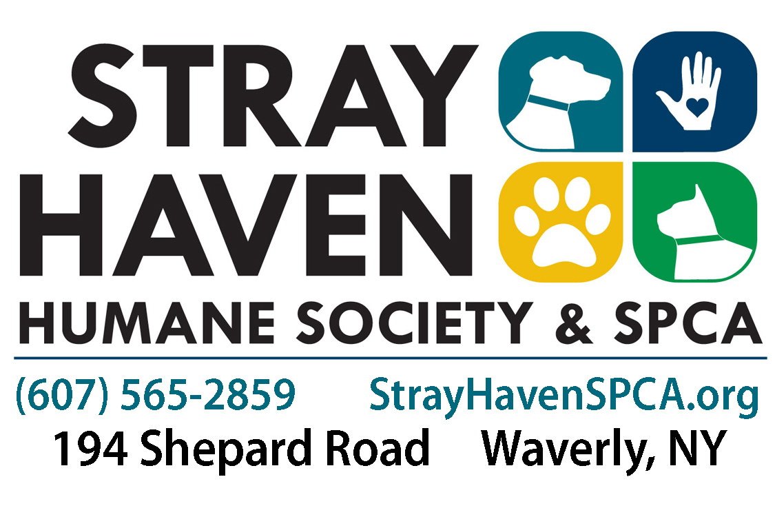 Pets for Adoption at Stray Haven Humane Society and S P C A