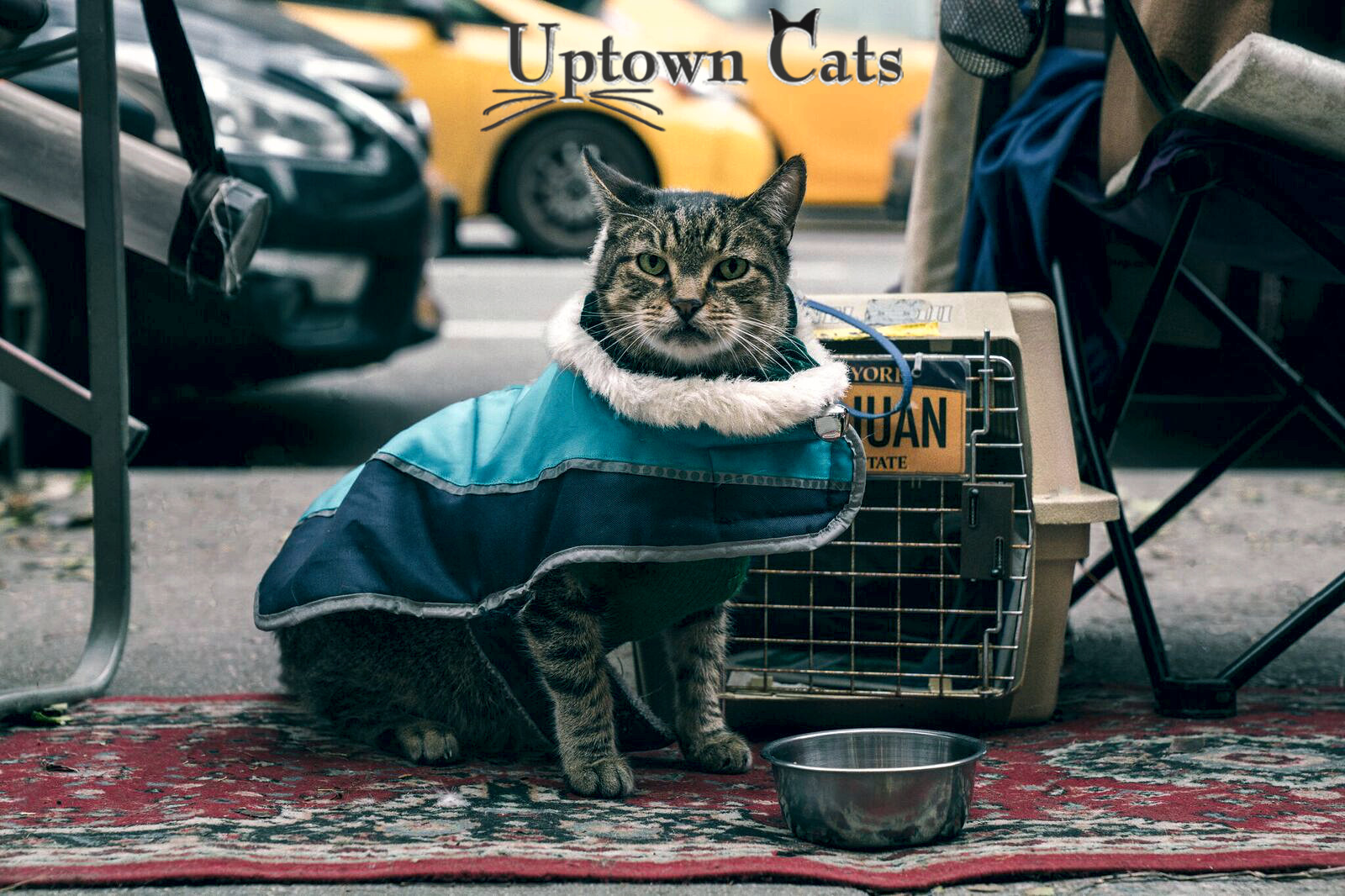 Pets for Adoption at Uptown Cats, in New York, NY | Petfinder