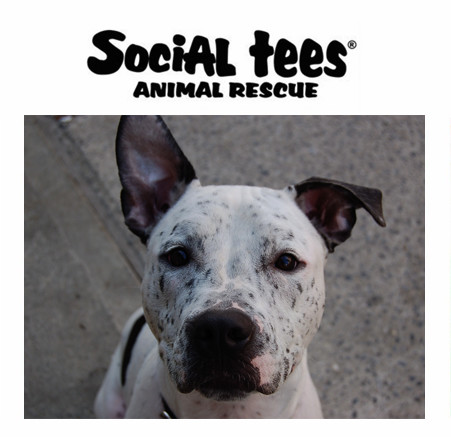 Social Tees Animal Rescue Foundation