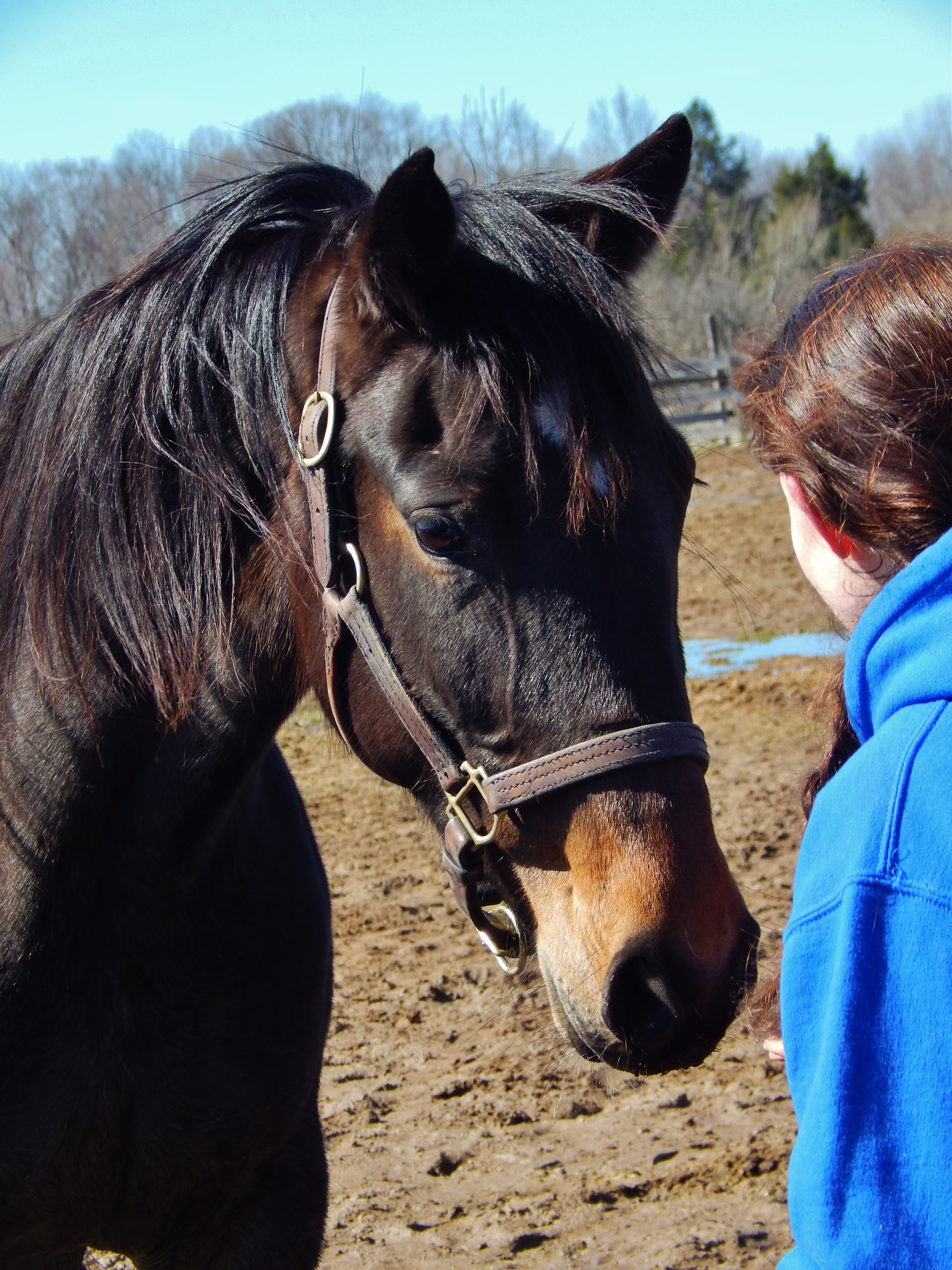 Pets For Adoption At Sunshine Horses Inc In Clay Ny