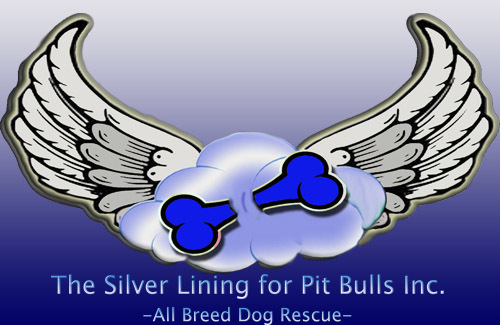 The Silver Lining for Pit Bulls