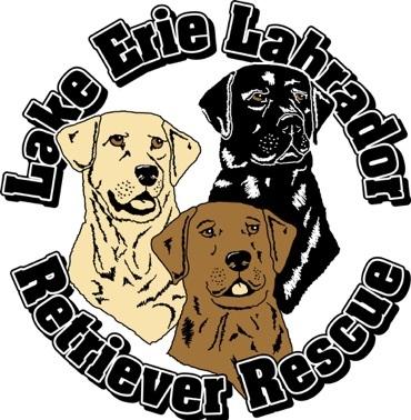 Lake Erie Labrador Retriever Rescue