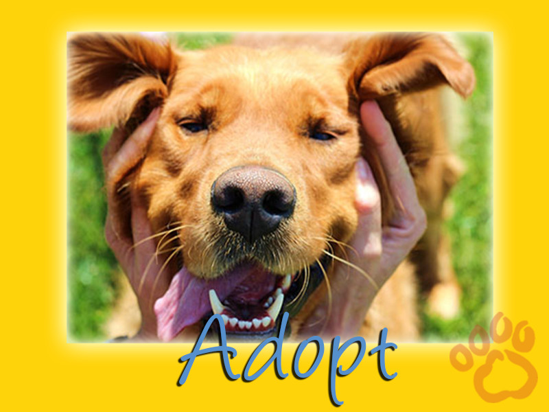 Adopt anytime at www.gr-rescue.org