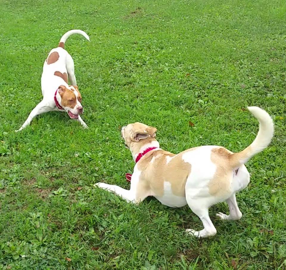 Columbiana County Dog Pound & Adoption Center