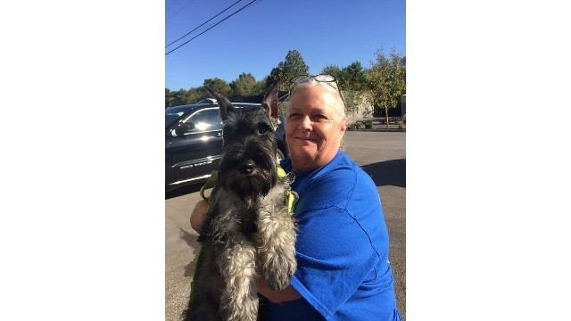 Pets For Adoption At Schnauzer Rescue Cincinnati In