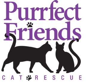 Purrfect Friends