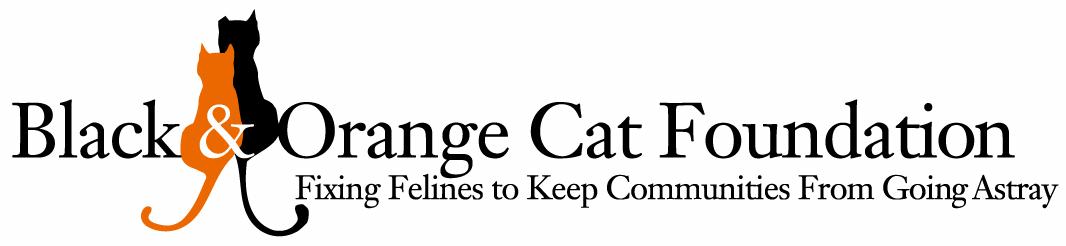 Black and Orange Cat Foundation