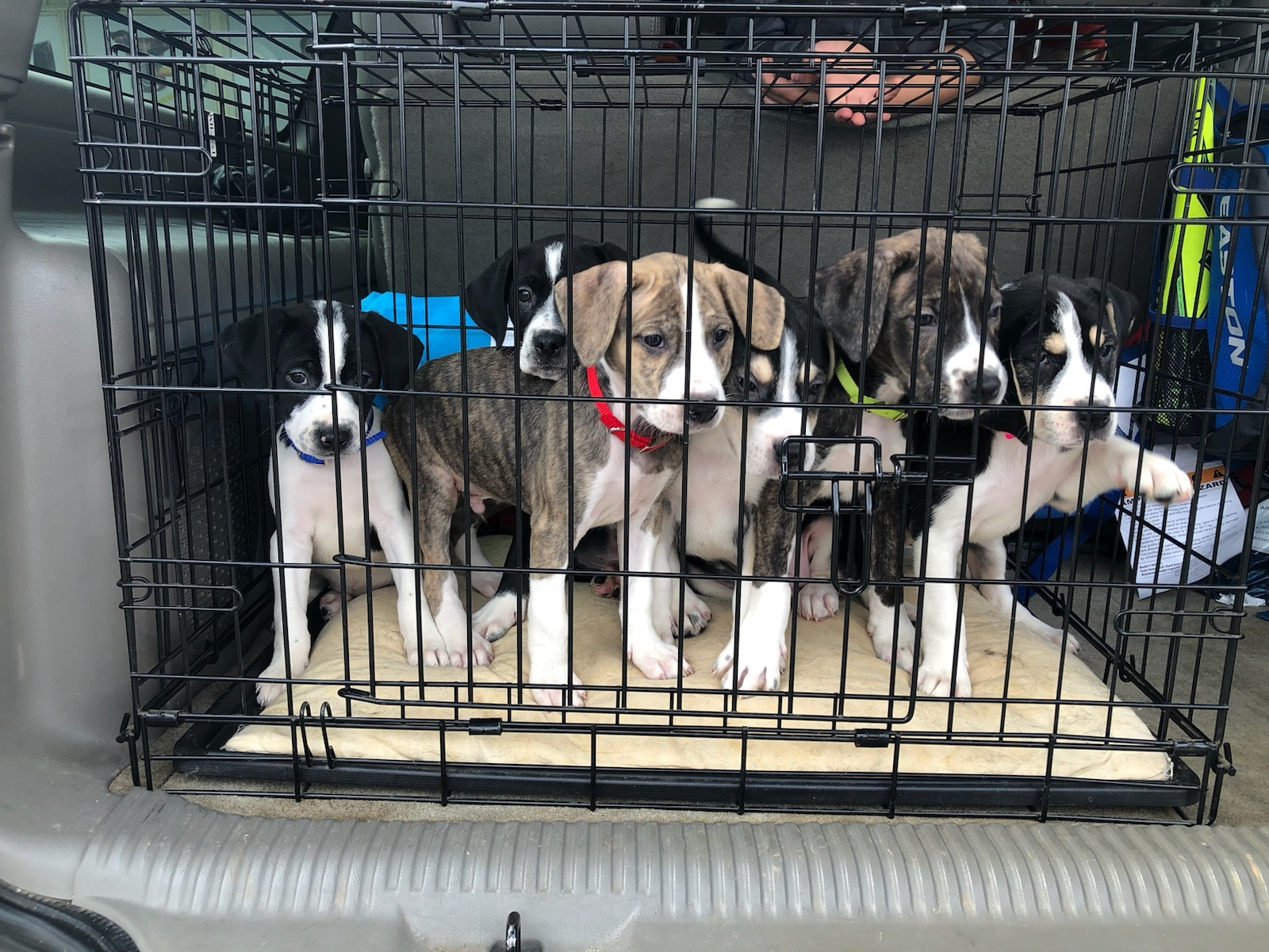 SAVE A MOM PREGNANT DOG RESCUE