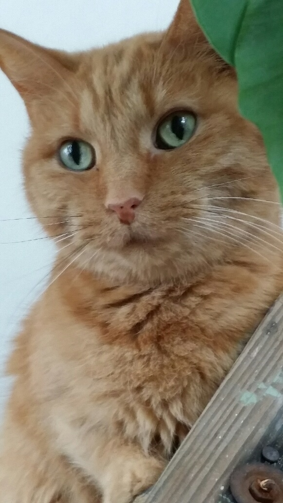Pets for Adoption at Smiley Cat Rescue, in Cincinnati, OH | Petfinder