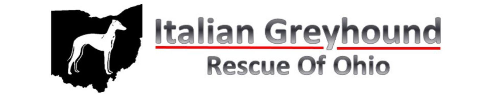 Greyhound Dog Rescue Columbus Ohio